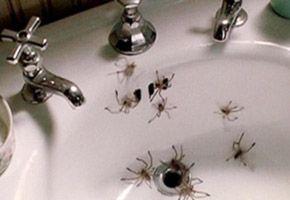 P-Trap-Arachnophobia-Sidebar-Gear-Patrol