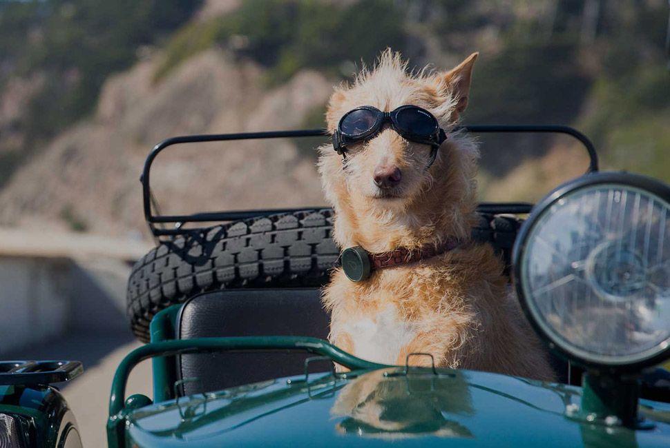Dog-GPS-Gear-Patrol-Lead-FUll