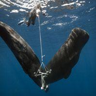 Freedivers-Whales-Gear-Patrol