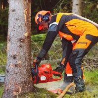 how-to-fell-a-tree-gear-patrol-lead