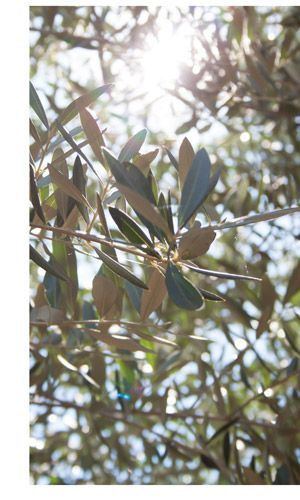 Olive-Oil-Side-Macro-Gear-Patrol