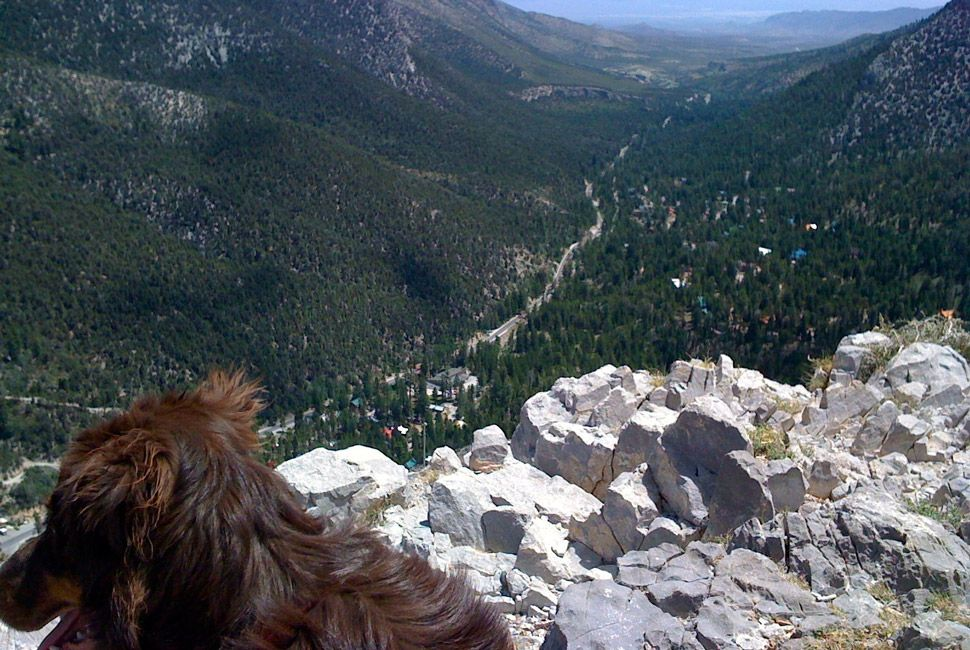 Mt-Charleston-Reader-Hikes-Gear-Patrol