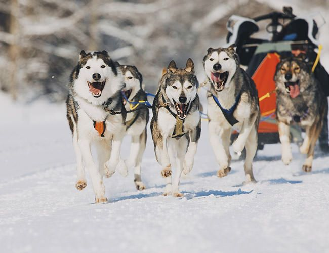 dog-sledding-alaska-gear-patrol-gore-tex