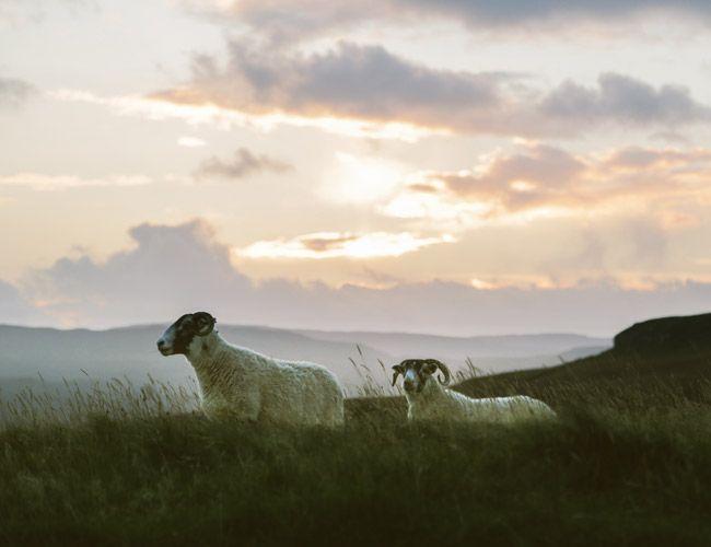 Chasing-Sheep-Gear-Patrol-Lead