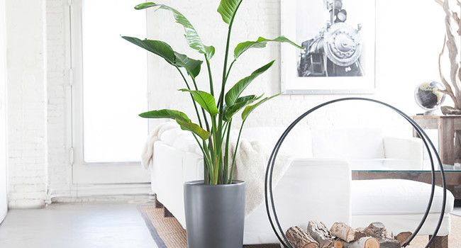 The Best Houseplants You (Probably) Won't Kill