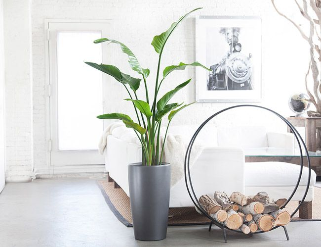 10 Best Indoor Plants For Men