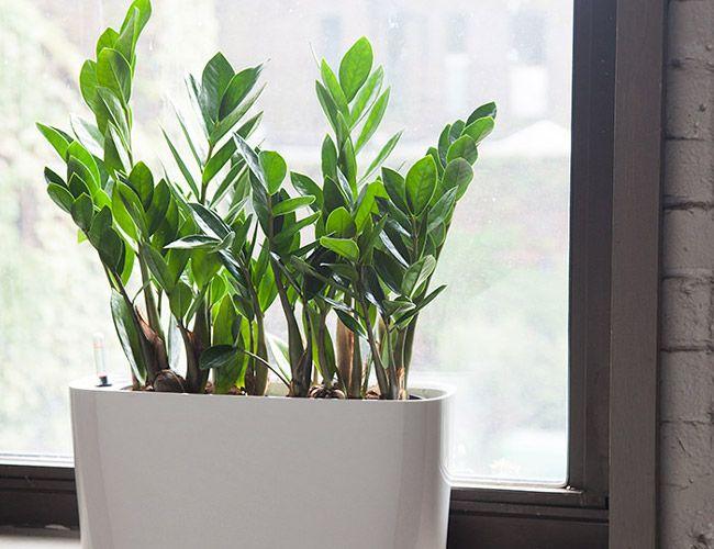 10 Best Indoor Plants For Men Gear Patrol