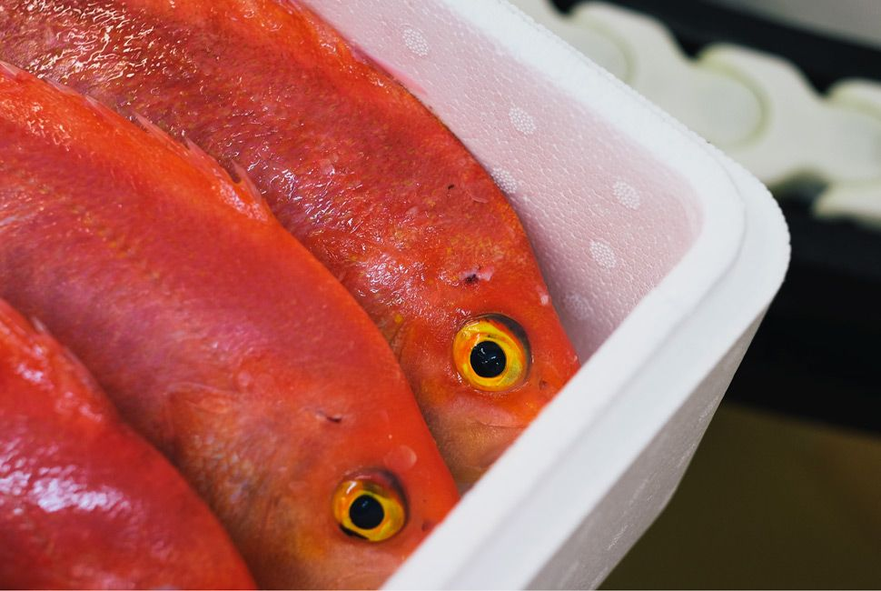 Red Snapper, harvested by ikijime.