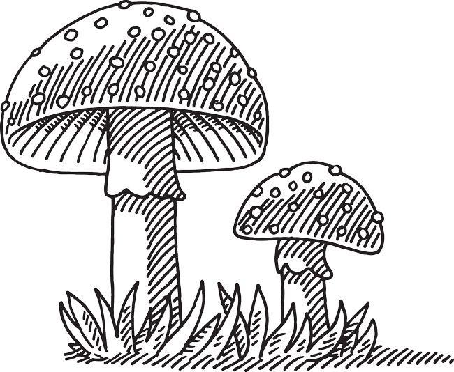 Fly Agaric Mushroom Drawing