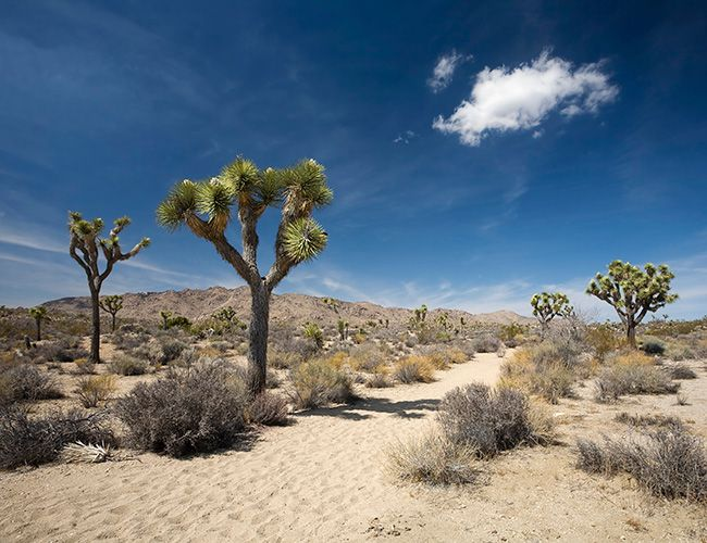 A Laid-Back Guide to Joshua Tree