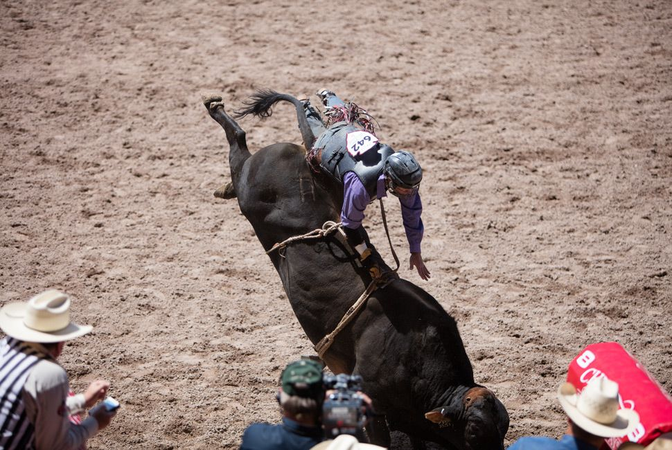 "Tuckness's job is to protect bull riders from the aftereffects of tangling with a brahma bull, which would ""just as soon kill you as look at you."" The bulls themselves are devastating athletes. One bull rider called them ""like 2,000-pound cats."""