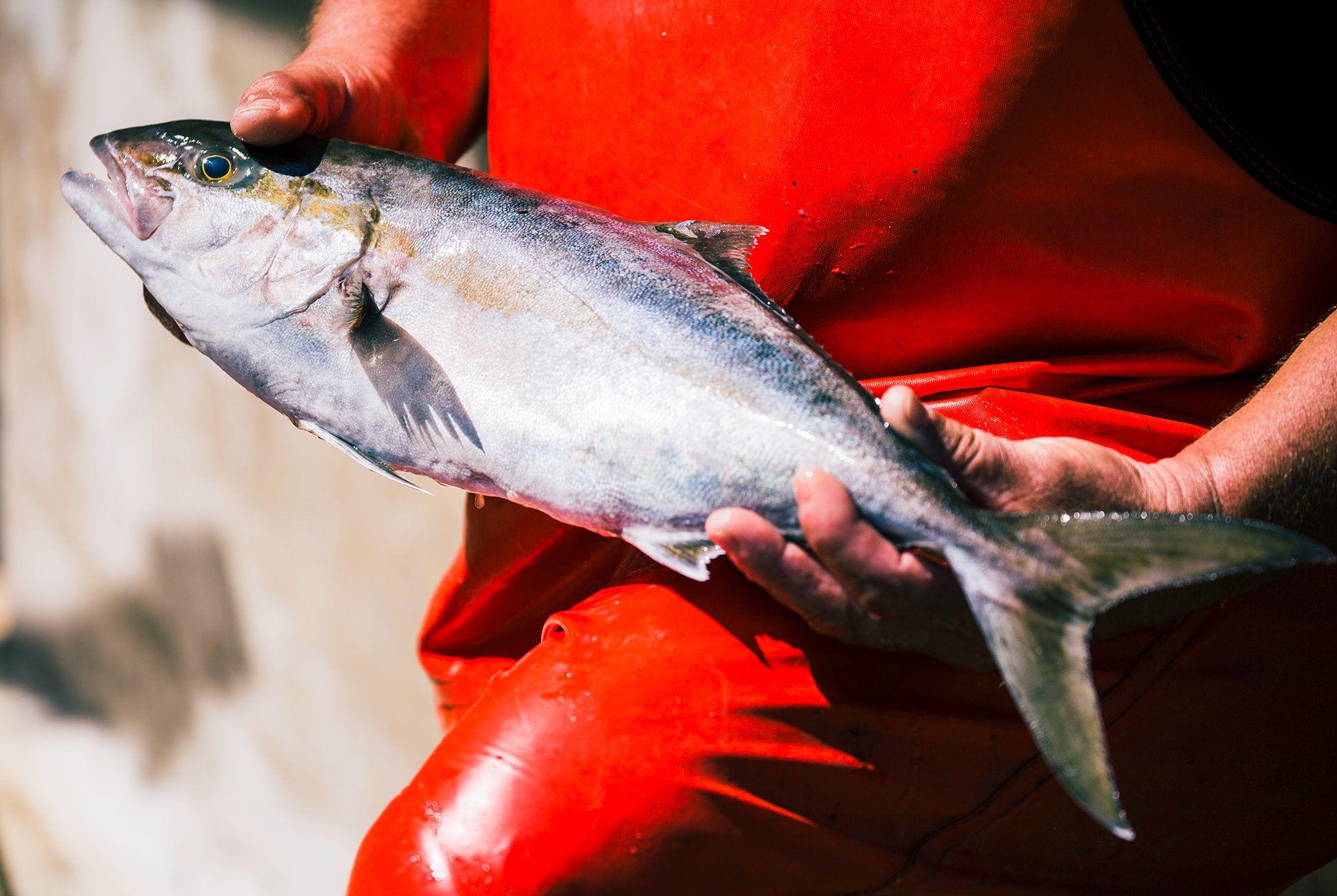 Charleston-Seafood-Gear-Patrol-Purveyors-11