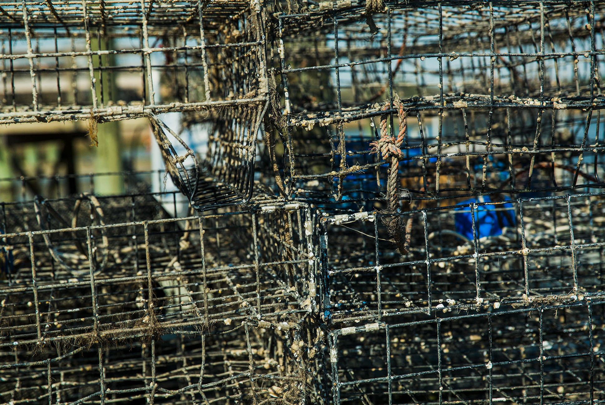 Charleston-Seafood-Gear-Patrol-Purveyors-18