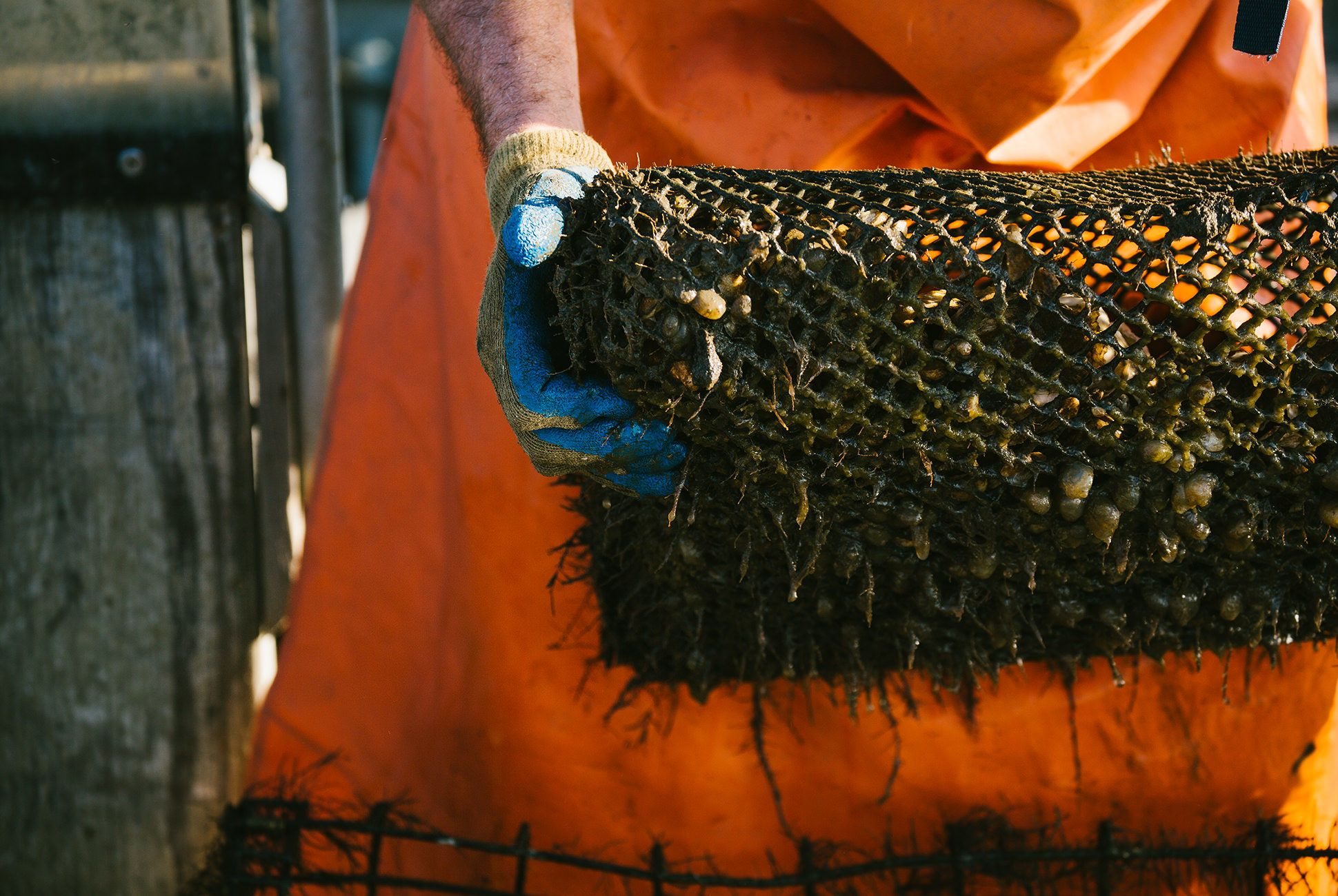 Charleston-Seafood-Gear-Patrol-Purveyors-23