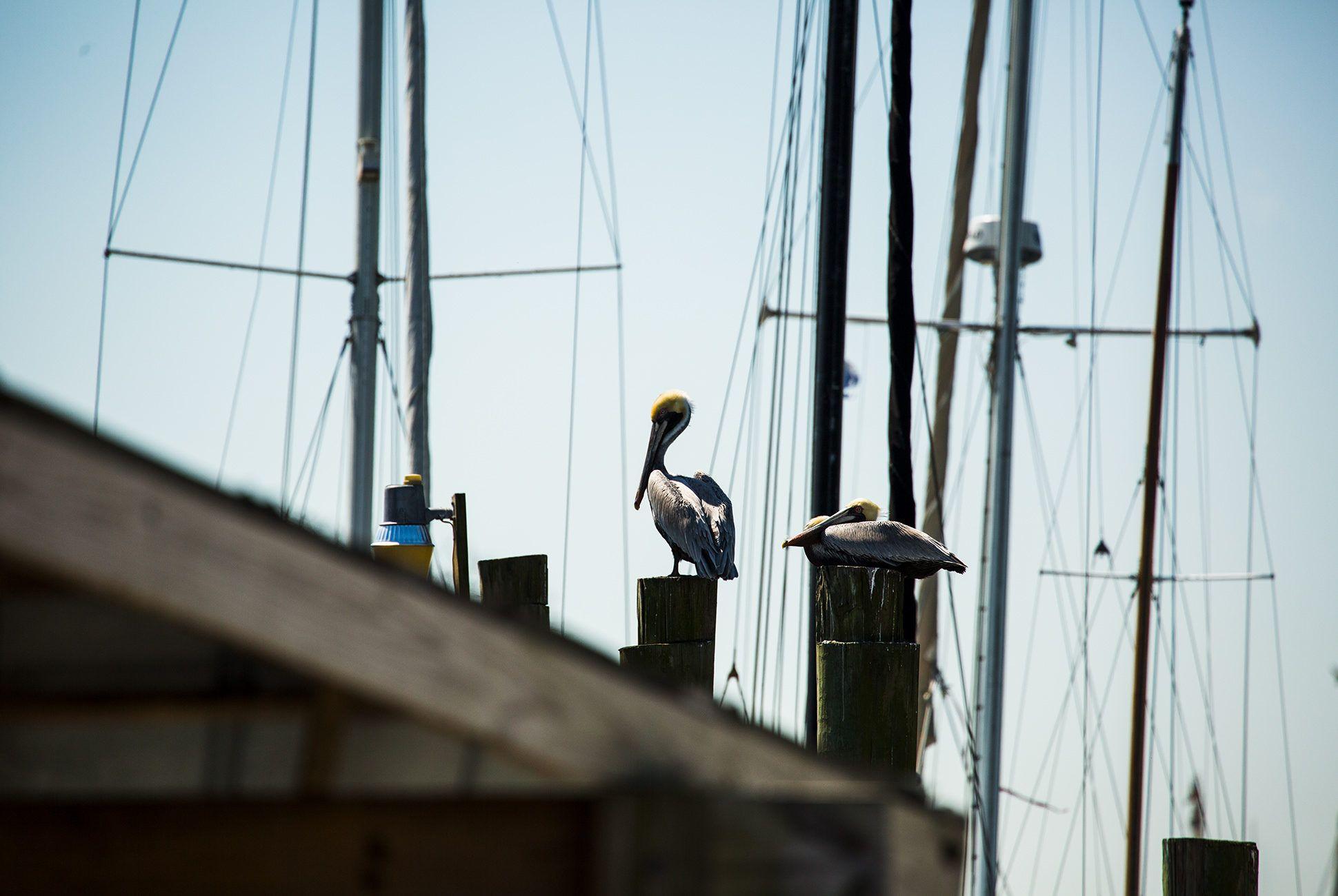Charleston-Seafood-Gear-Patrol-Purveyors-34