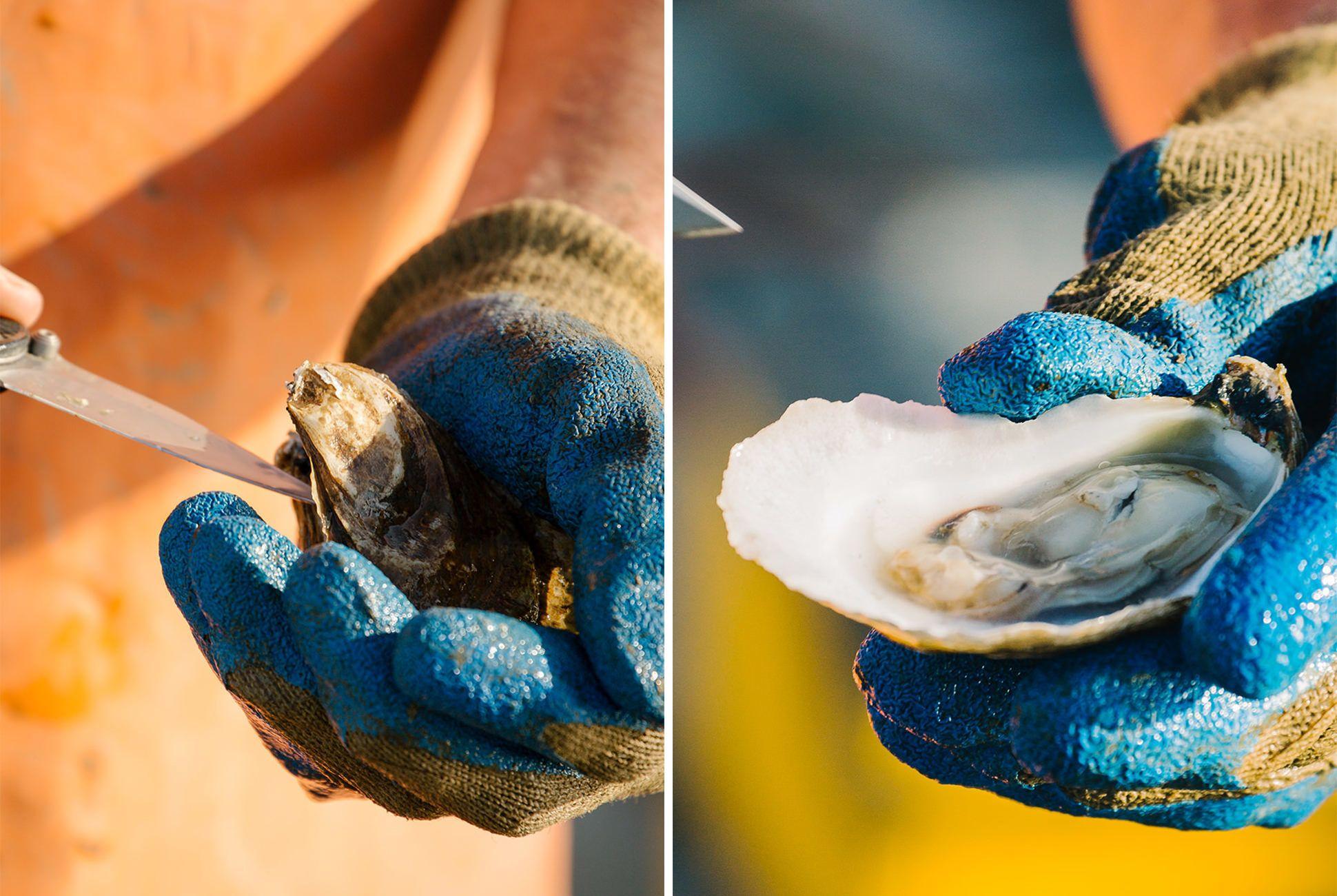 Charleston-Seafood-Gear-Patrol-Purveyors-36