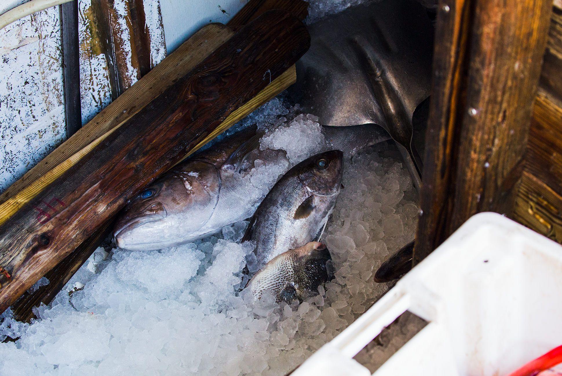 Charleston-Seafood-Gear-Patrol-Purveyors-5