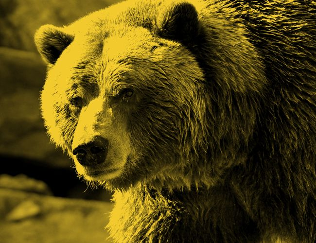 gear-patrol-guide-to-life-animal-attack-grizzly
