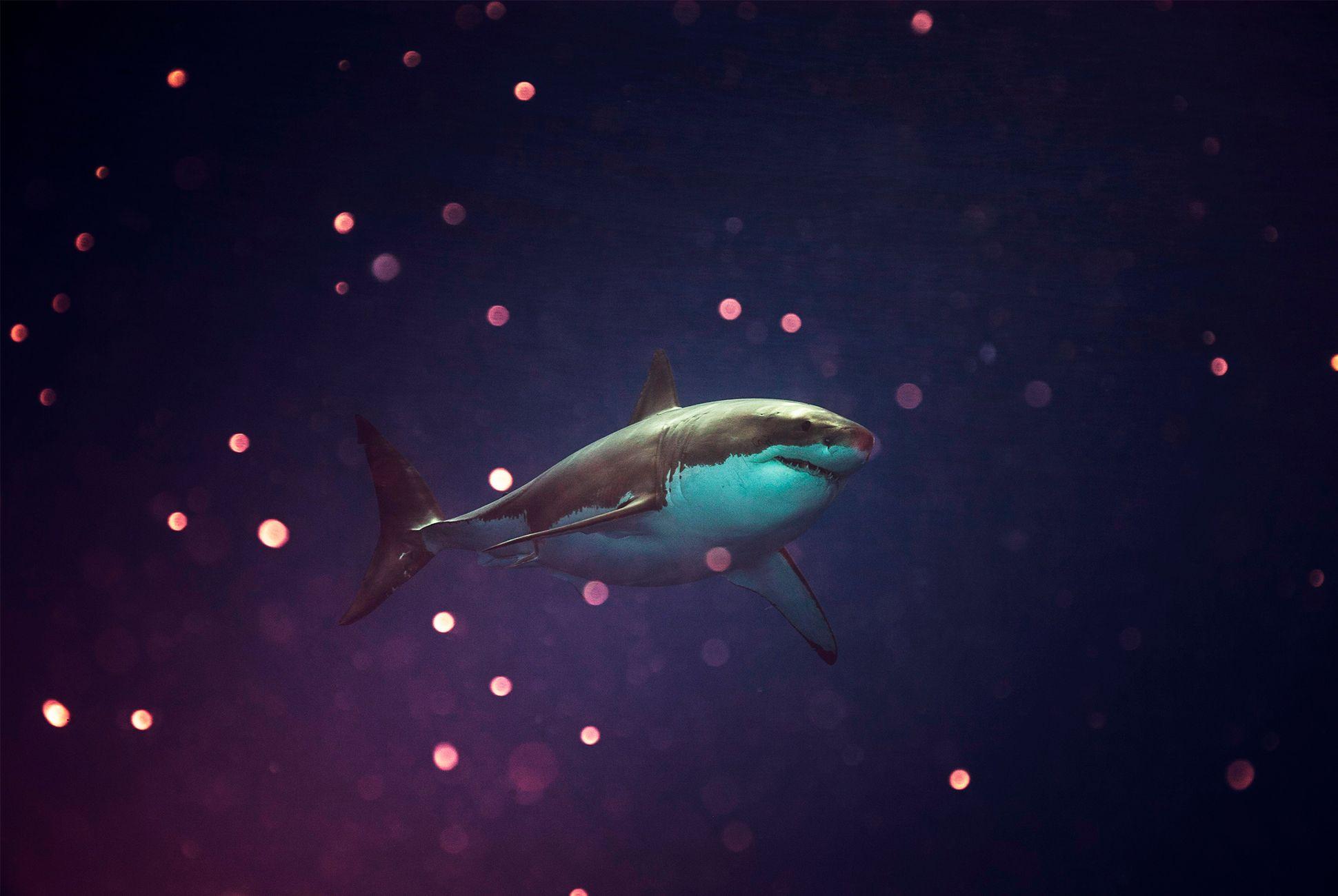 shark-3-gear-patrol-970