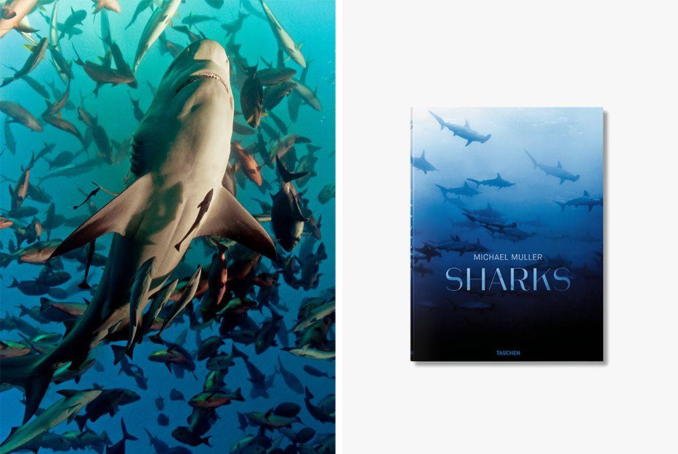 shark-5-gear-patrol-970
