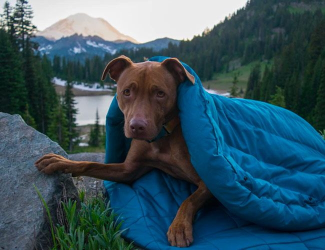 Every Dog Owner Needs this Camping Essential