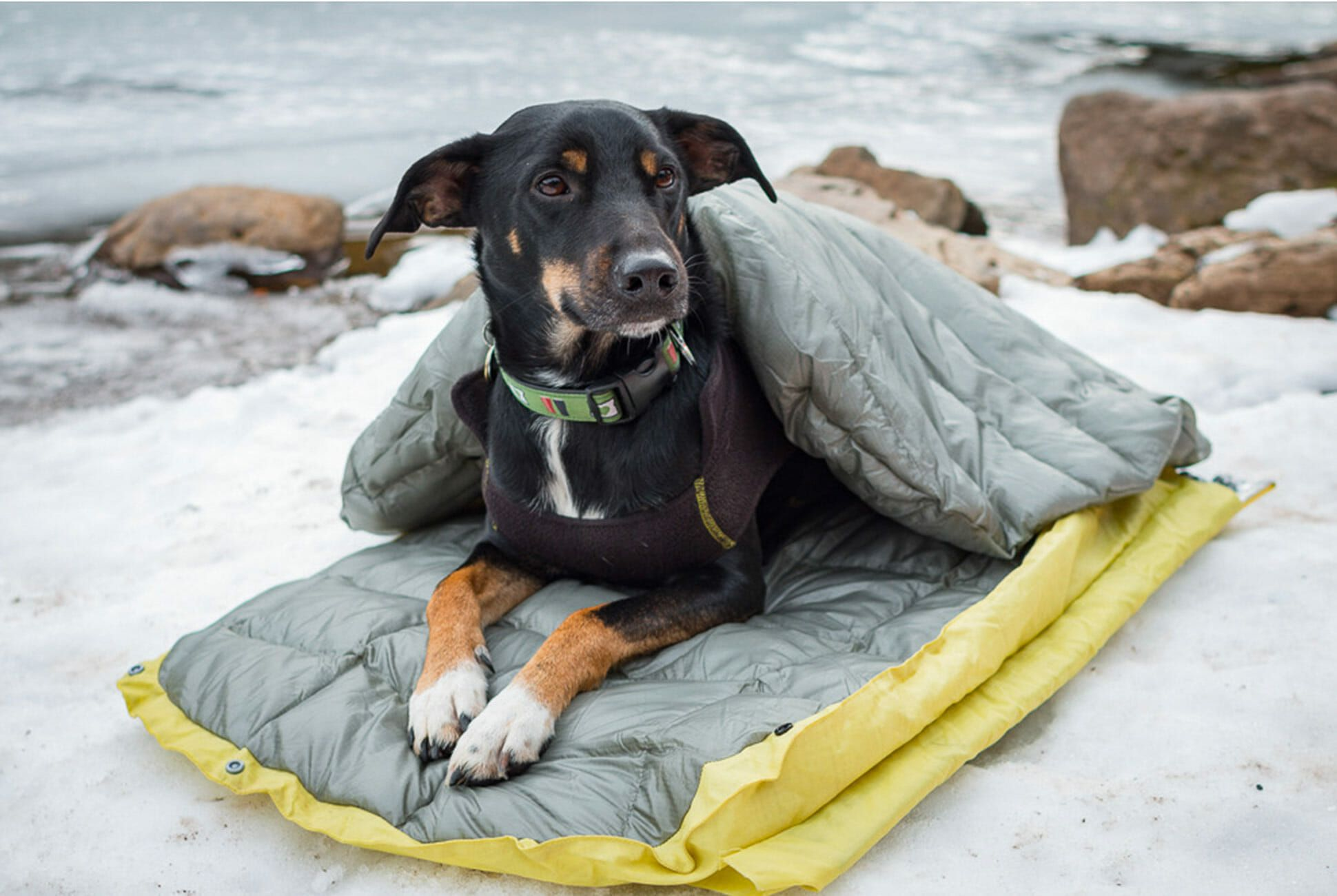 Every Dog Owner Needs This Camping Essential Gear Patrol