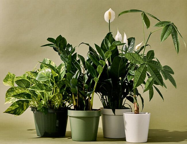The 9 Best Indoor Plants for Every Kind of Person - Gear Patrol  Leaf Cr House Plant on 5 leaf house plant, 3 leaf plant identification, 8 leaf house plant, 3 leaf outdoor plant,