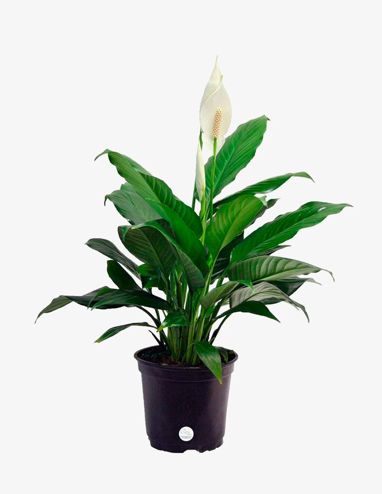 The 10 Best Indoor Plants for Every Kind of Person • Gear Patrol Ideal House Plants on wrightsville house, american girl house, easy clean house, beach house, home small modern house, fluff house, palladium house, gearhead house, topper house, anthem house, the rat house, average house, perfect house, actual house, dibs house, uncomfortable house, reliance house, mattel house, idea house, immense house,