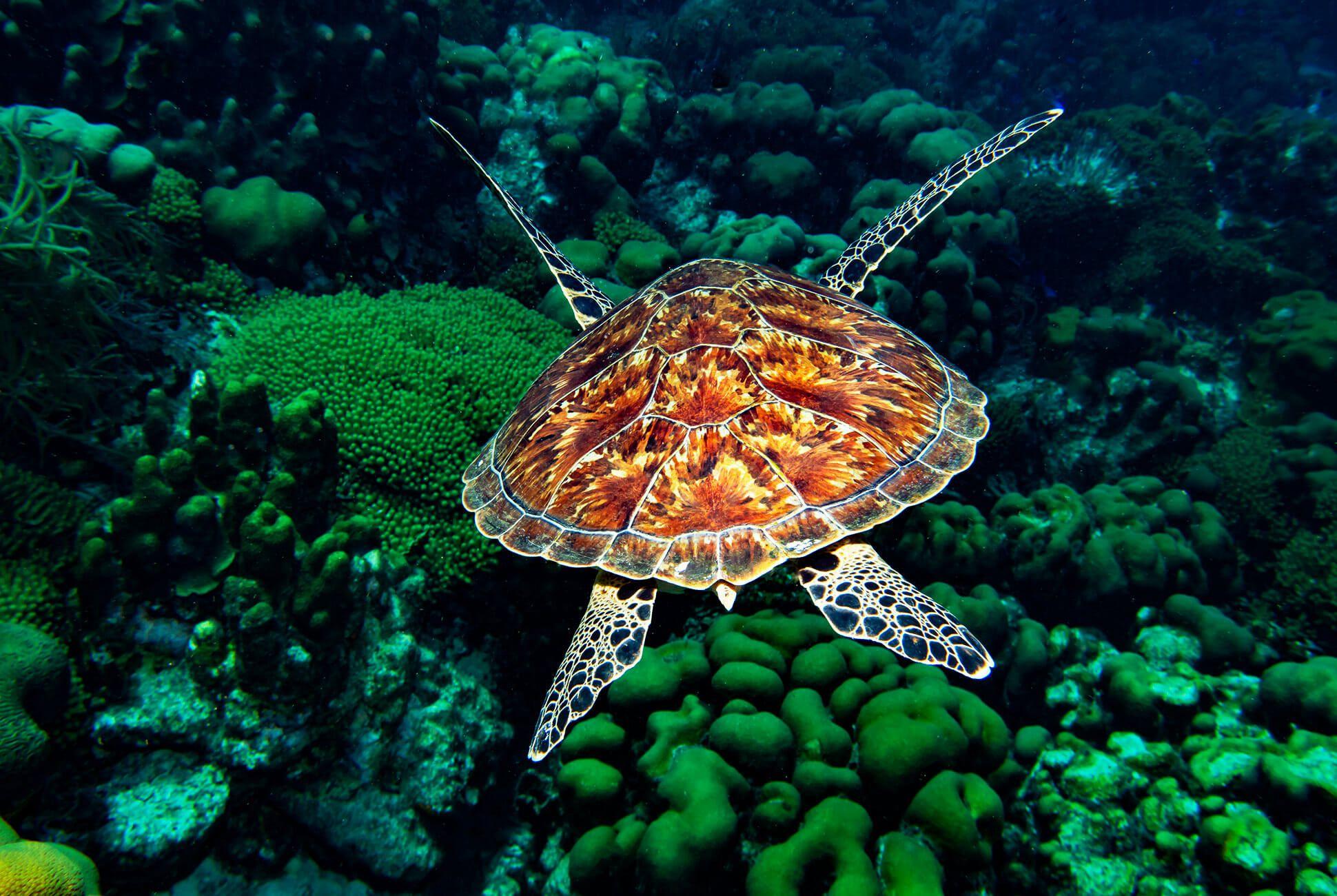 Diving-With-Doxa-Watches-in-Bonaire-gear-patrol-ocean-1