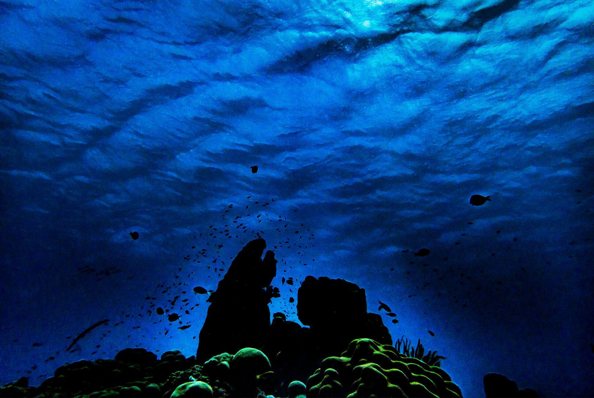 Diving-With-Doxa-Watches-in-Bonaire-gear-patrol-ocean-3
