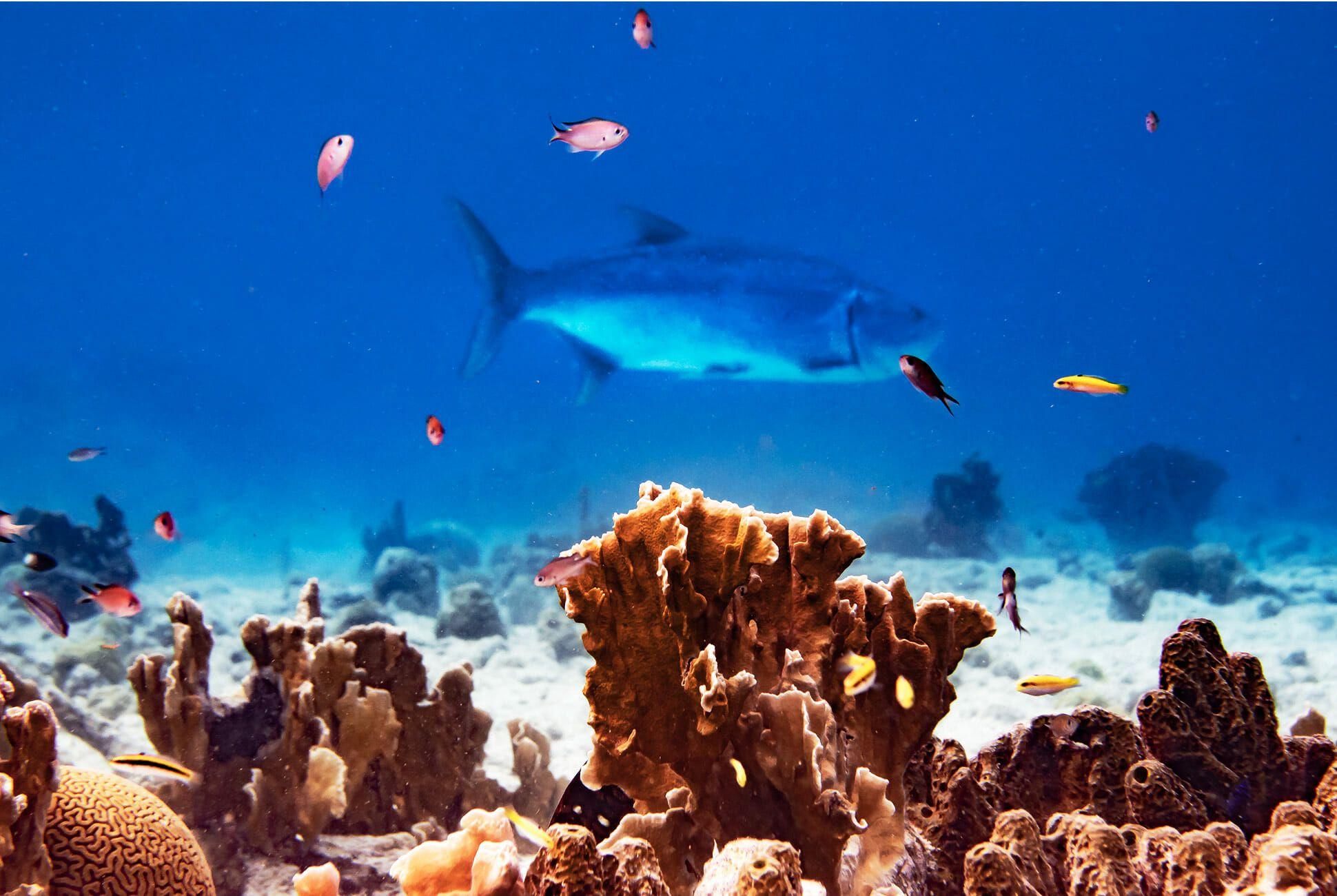 Diving-With-Doxa-Watches-in-Bonaire-gear-patrol-ocean-4
