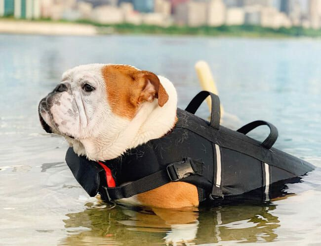 This Adorable Vest Will Save Your Dog's Life