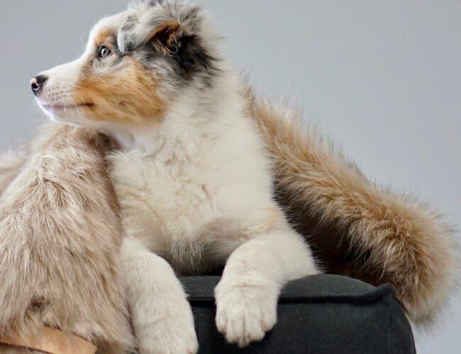 This Scandinavian Design-Inspired Pet Furniture Is Kind of Sick