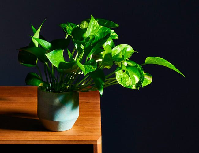 You Probably Need to Repot Your Houseplants ASAP. Here's How