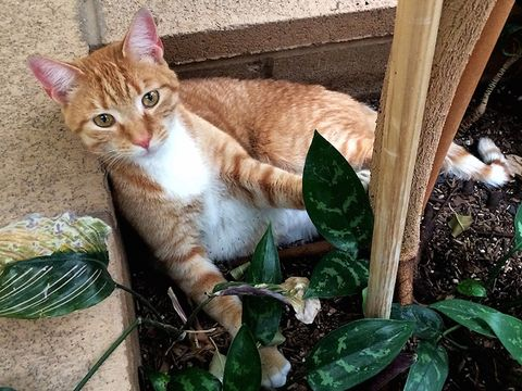 Missing Cat Found Across Country