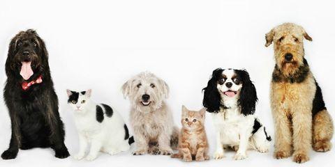 Most Popular Pet Names