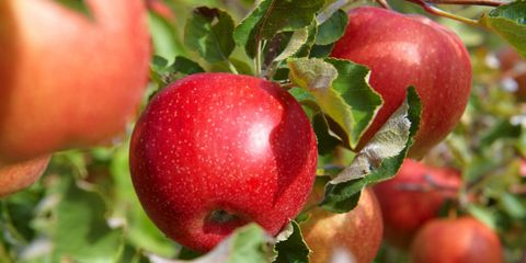 Dirty Dozen Foods with High Pesticide Residue - Best Organic