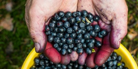 Produce, Fruit, Food, Natural foods, Ingredient, Seedless fruit, Berry, Frutti di bosco, Sweetness, Bilberry,