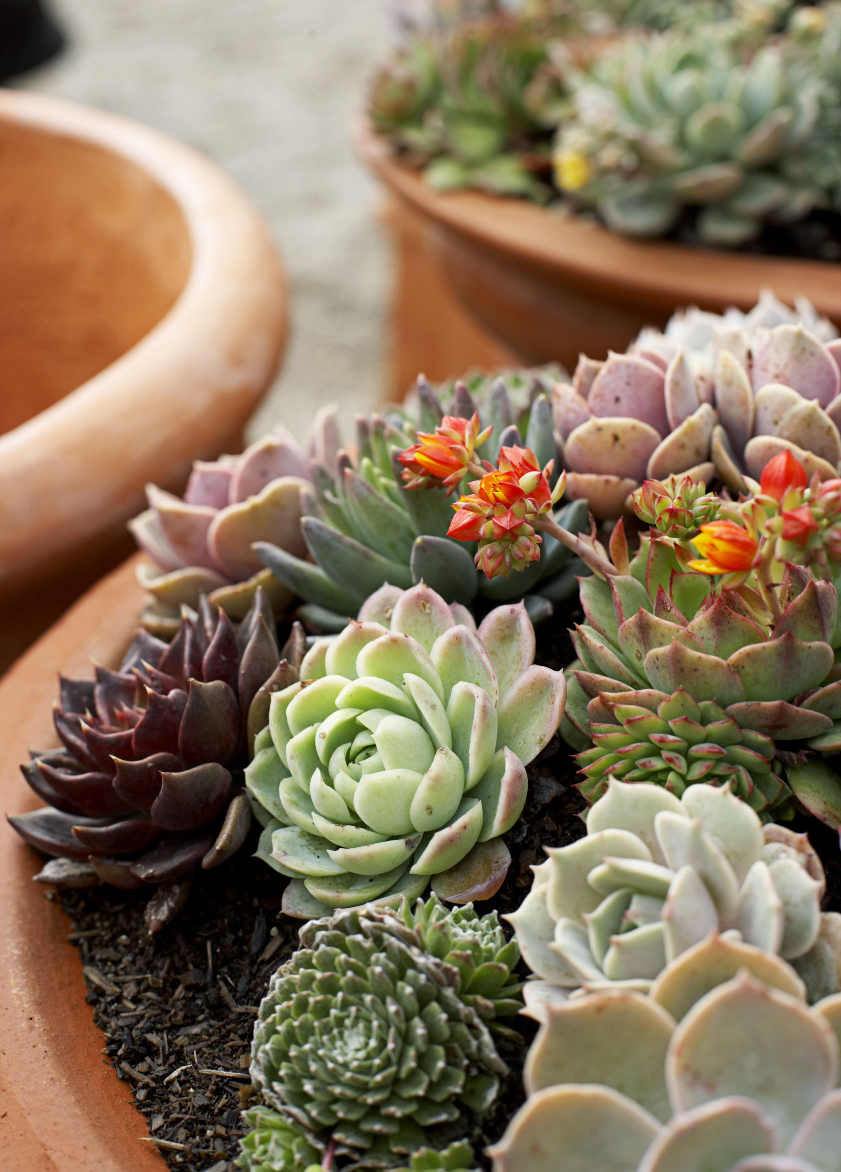 Houseplants That Don't Need Much Water - Hard to Kill Houseplants on