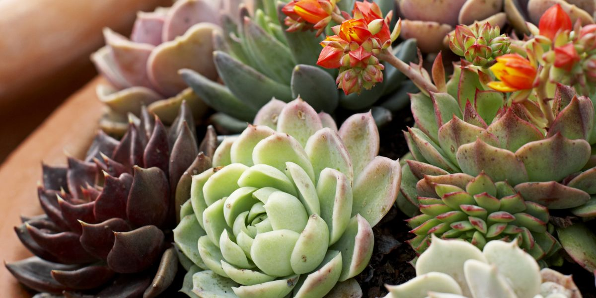 Houseplants That Don T Need Much Water Hard To Kill Houseplants