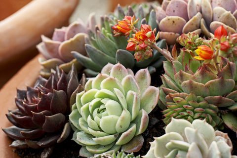 Houseplants That Don't Need Much Water - Hard to Kill ... on succulent toes, succulent id, succulent pallet wall, succulent varieties, succulent wall decor, succulent wall letters, succulent vines, succulent plants, succulent ivy, succulent living wall, succulent pig, succulent with pink flowers, succulent leaves,