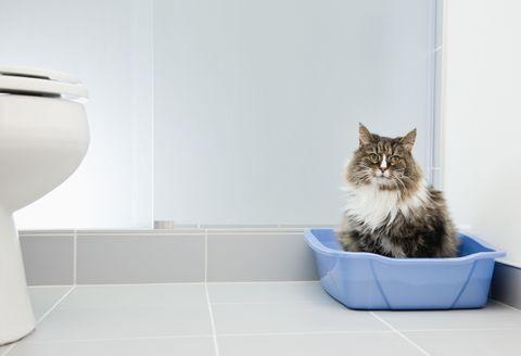 Kitty Litter Radiation Leak