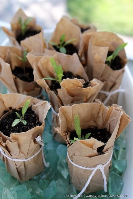 Toilet Paper Seed Starters