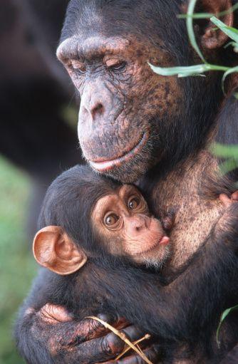 Cute Photos of Animal Moms and Babies - Animal Photos