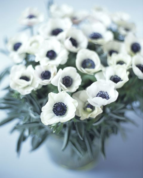 41 flowers with surprising meanings meanings of flowers image mightylinksfo