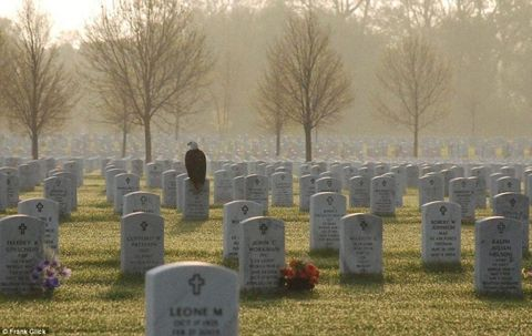 Eagle on Soldiers Grave