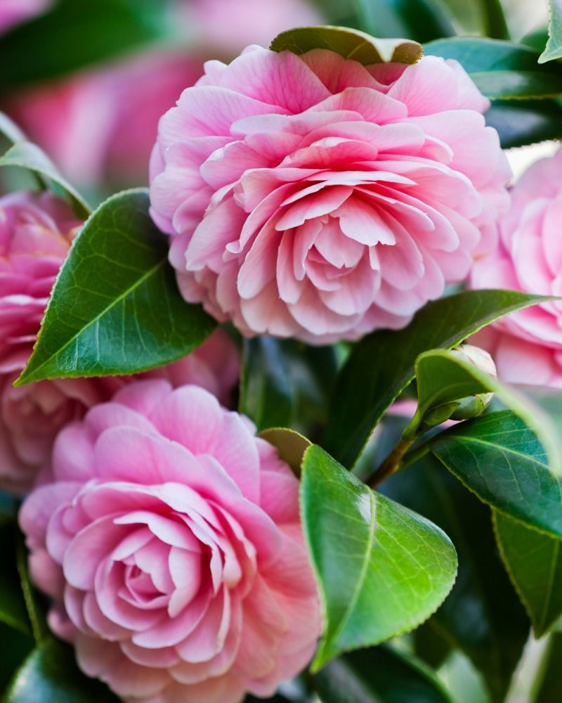 40 Flowers With Surprising Meanings Meanings Of Flowers