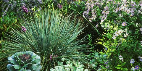 Drought Tolerant Plants - Best Plants for Drought