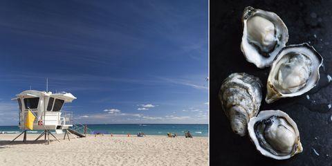 Biggest Beach Dangers and Prevention - Shark Attacks