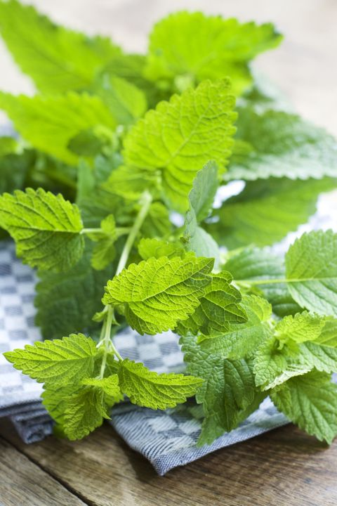 """Its pronounced lemon scent recalls citronella (but in a far more appetizing way). In fact, the plant has <a target=""""_blank"""" href=""""https://gerson.org/gerpress/6-herbs-that-naturally-repel-mosquitoes-and-fleas/"""">high levels of citronellal</a>, a compound bugs strongly dislike."""